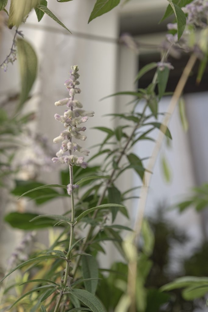 About Plants bvba (21)