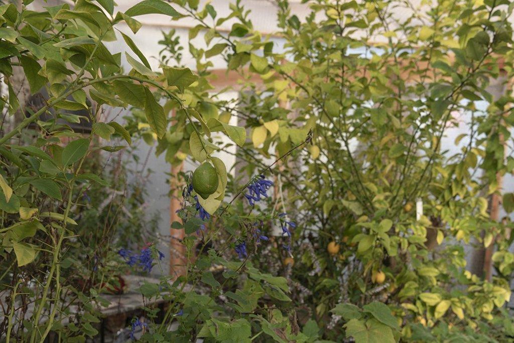 About Plants bvba (23)