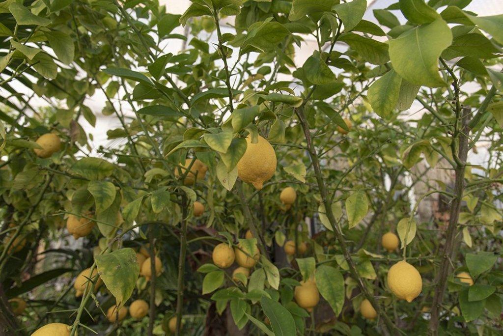 About Plants bvba (24)