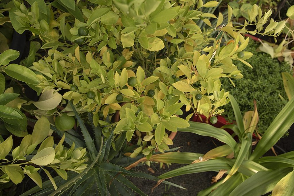 About Plants bvba (25)