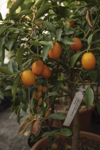 About Plants bvba (26)