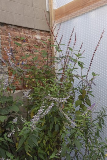 About Plants bvba (29)