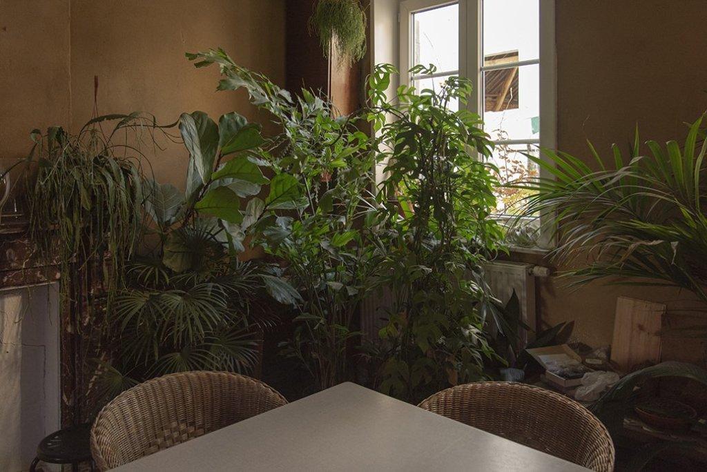 About Plants bvba (30)