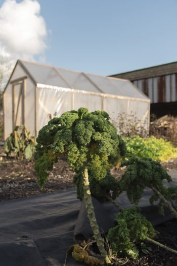 About Plants bvba (37)
