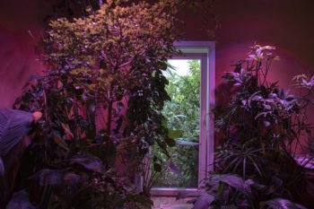 About Plants bvba (4)