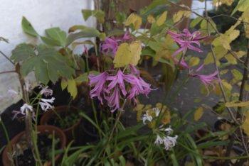 About Plants bvba (8)