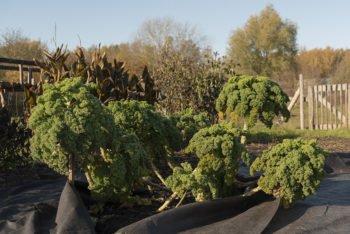 About Plants bvba (9)